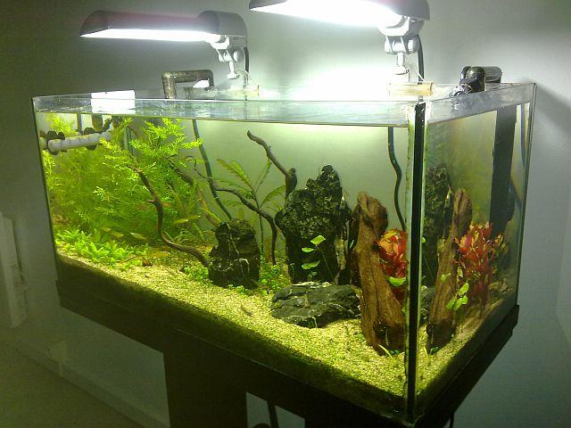 aquarium 60l nano sulawesi thierry page 1